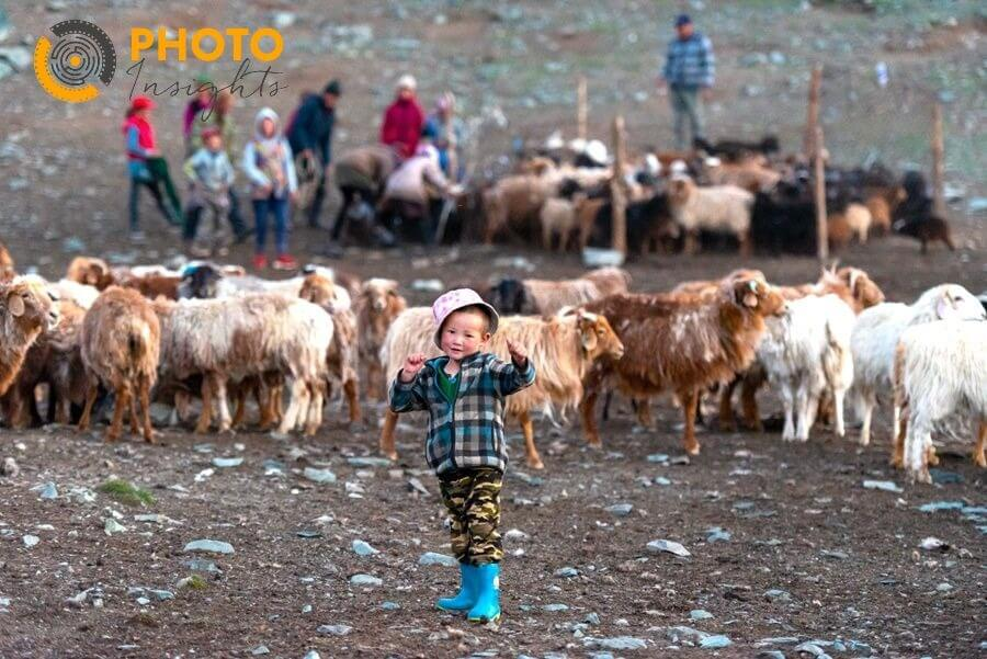 goats and sheep with eagle hunter boy