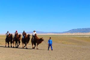 camels in khongor sand dune