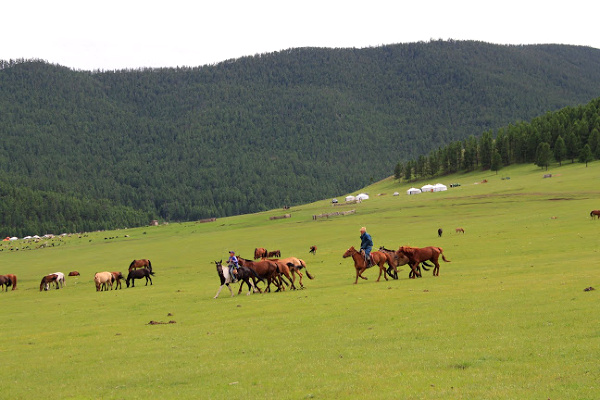 horse riding in grasslands